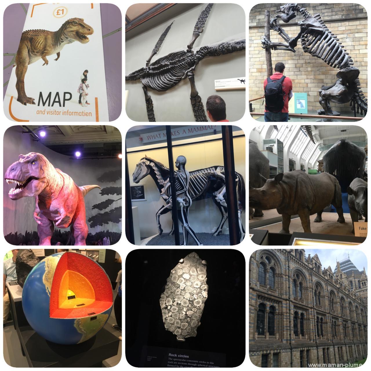 musee histoire naturel