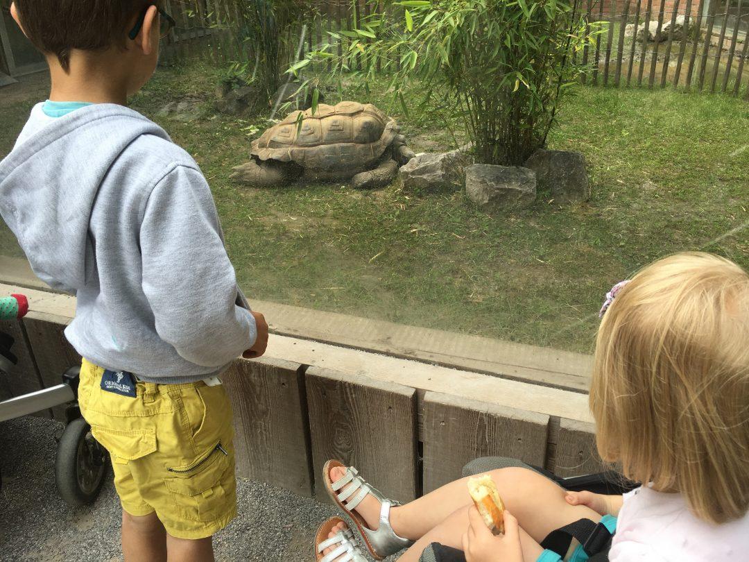 Notre après-midi au Zoo de Lille