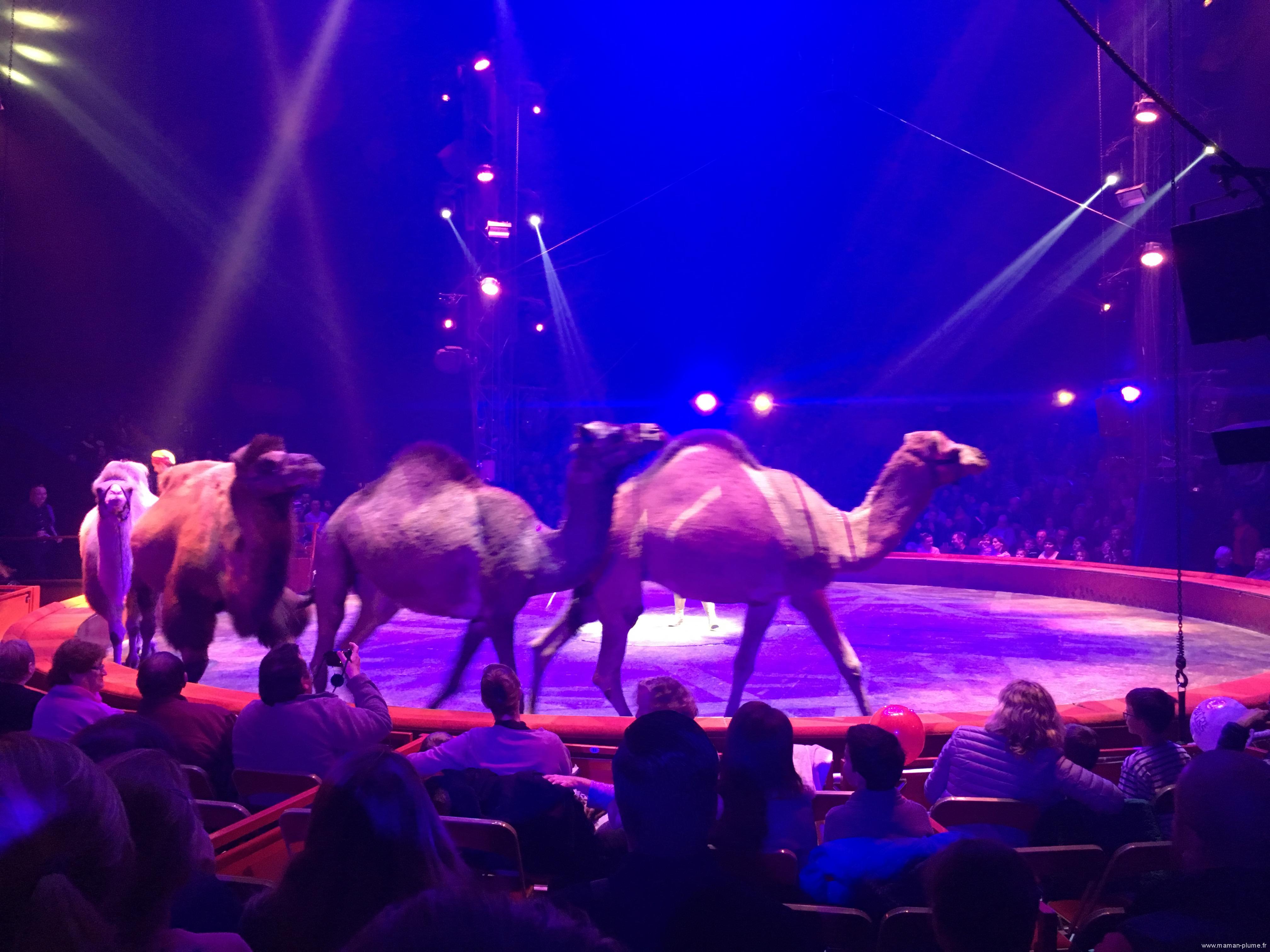 Notre sortie au Cirque Arlette Gruss