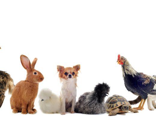 Papa, maman, bébé et cri – Devinettes sur les animaux
