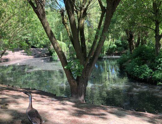 Parc du Lion à Wattrelos, un après-midi en famille !