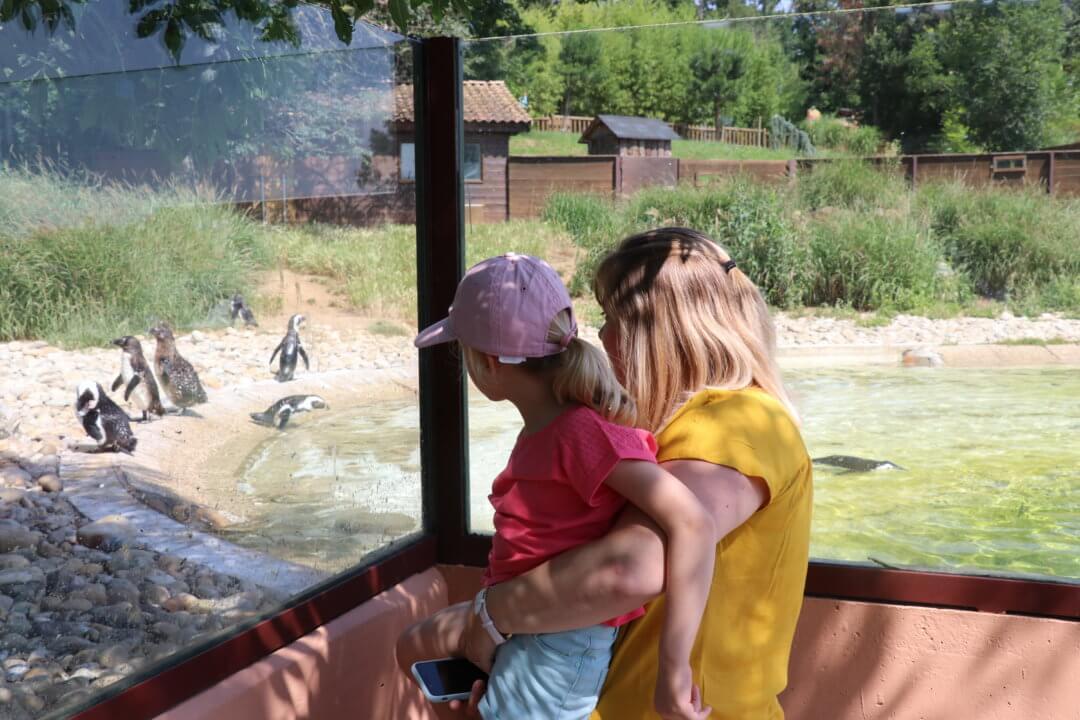 Le Safari de Peaugres, un zoo pas comme les autres